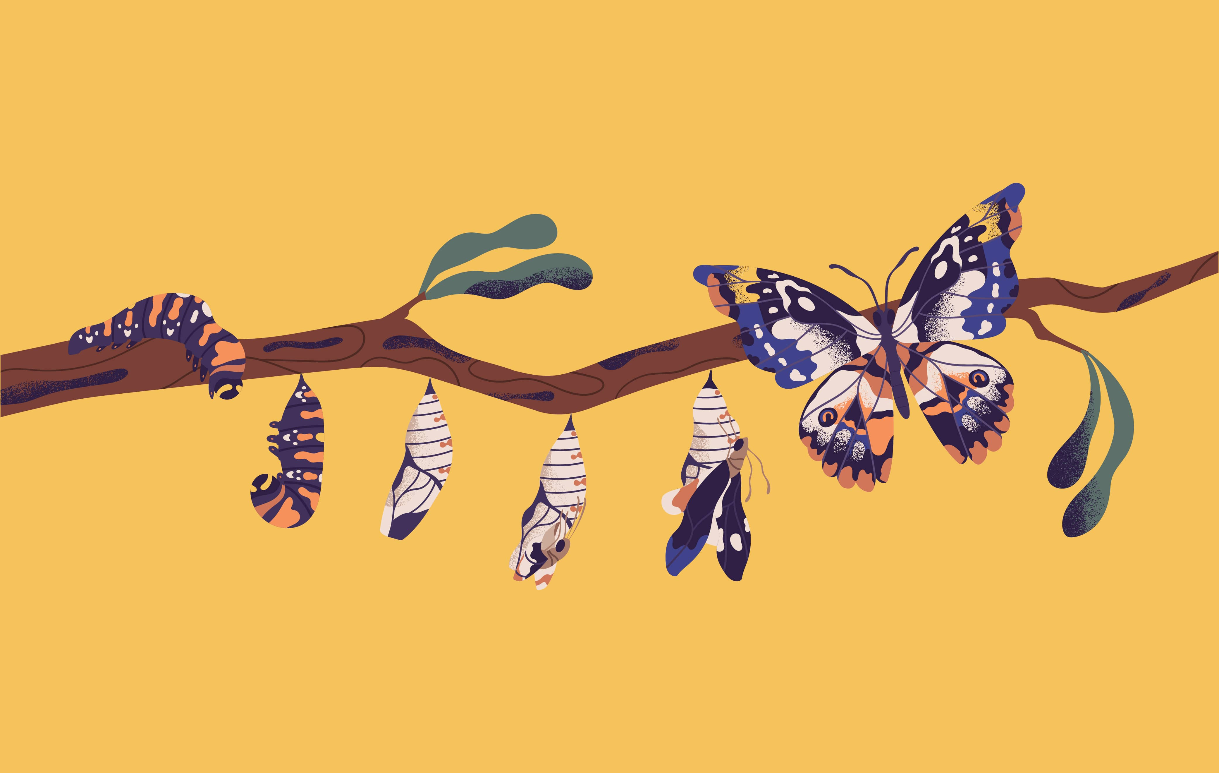 Illustration of a butterfly lifecycle- caterpillar, larva, pupa, and adult butterfly, perching on a branch.